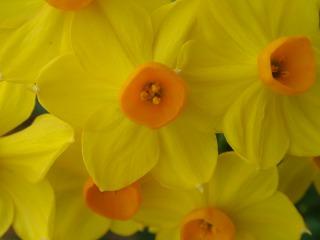 Ja és primavera!