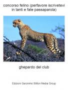 ghepardo del club - concorso felino (perfavore iscrivetevi in tanti e fate passaparola)