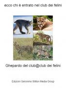 Ghepardo del club@club dei felini - ecco chi è entrato nel club dei felini