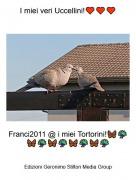 Franci2011 @ i miei Tortorini!🦋🦚🦋🦚🦋🦚🦋🦚🦋🦚 - I miei veri Uccellini!♥️♥️♥️