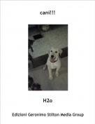 H2o - cani!!!