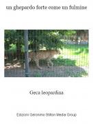 Geca leopardina - un ghepardo forte come un fulmine