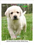 Topidora - Playful Puppies