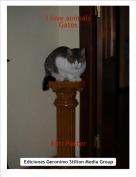 Rati Potter - I love animalsGatos