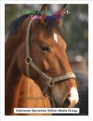 Ratoncita Dayara P. - Horse riding club -1-Todo empieza